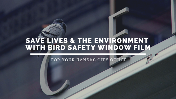 Save Lives & the Environment with Bird Safety Window Film for Your Kansas City Office